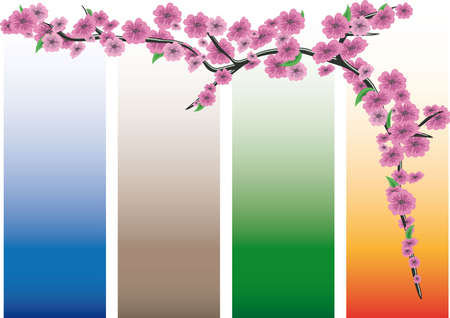 Sakura blossoms on colored bands Vector
