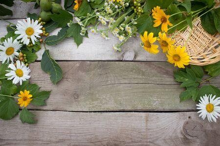 frash: Flora frame