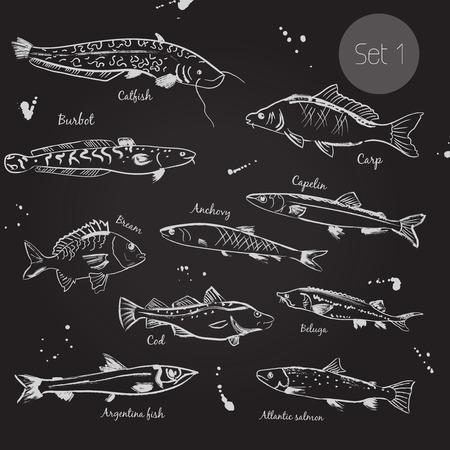 burbot: Ilustración aislada. Conjunto aislado animales del océano del mar, línea