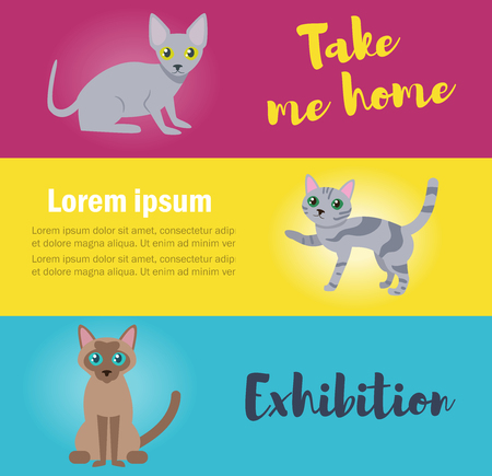 Cards with cats. Take me home. Vector. Cartoon. Isolated art Flat