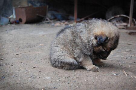 decepci�n: Cachorro sin hogar, sentimientos de soledad, la tristeza, la decepci�n