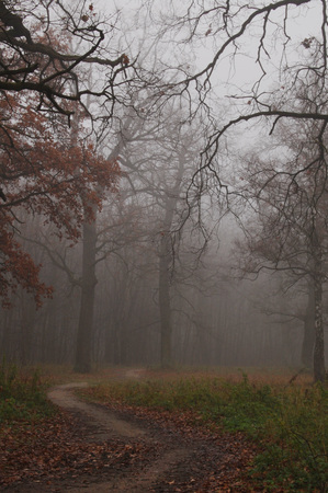 mistic: Path leads in autumn foggy forest