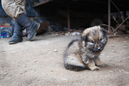 decepci�n: Homeless puppy near man legs.sentiments of loneliness, sadness, disappointment, homeless puppy Foto de archivo