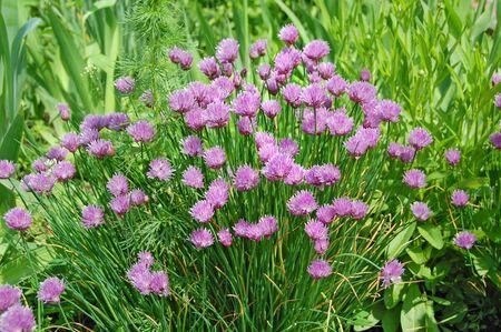 humilde: flor de primavera, verde, verdor. Hierbas y hojas.