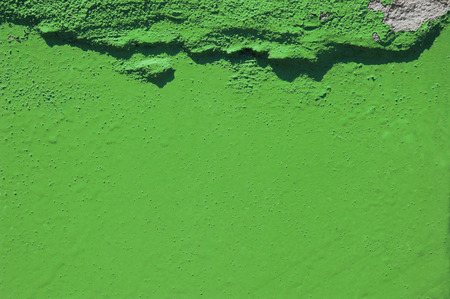 green grunge cement background. greenery, color of  year 2017. Pantone