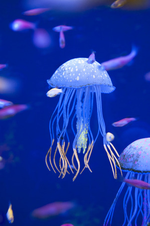 Little medusas in aquarium. Ocean or sea inhabitants, fishes, water plants. Stock Photo