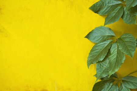 Green leaves on yellow metal wall background 版權商用圖片