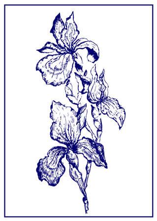 Geschilderde iris.