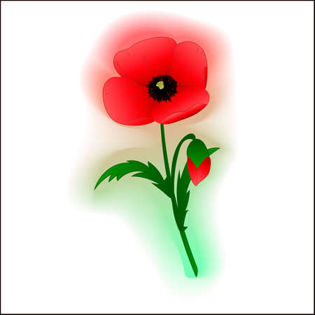 Illustration of a red poppy flower a white background