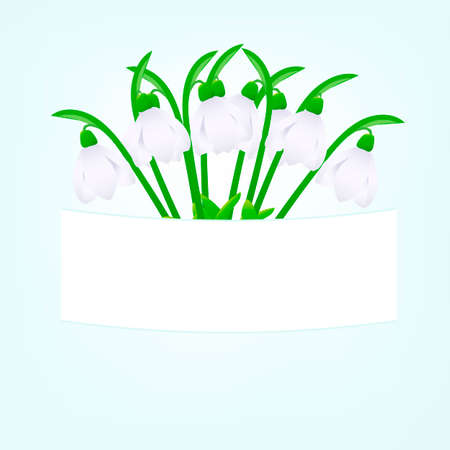 illustration snowdrops on a light green background