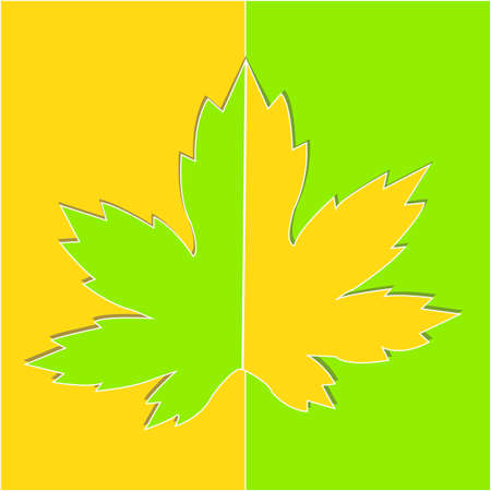 Maple leaf in yellow, and green colors isolated on white background. Autumn background with leaves. Vector design illustration.