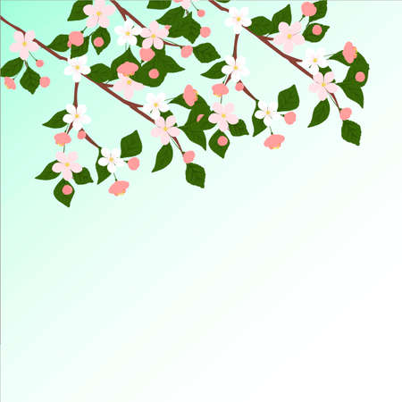 Branch of Cherry blossom , Vector illustration