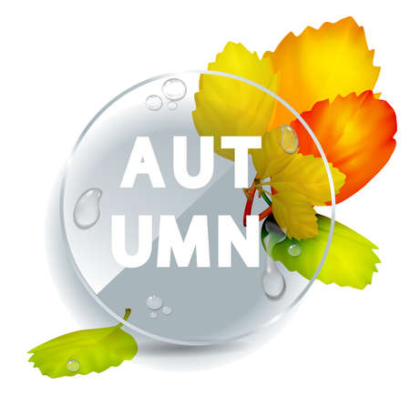 Autumnal round frame. Bouquet of autumn leaves. Background with  autumn leaves. Fall of the leaves. Vector illustration. Glass plate with raindrops. Autumn concept