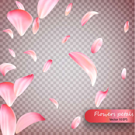Pink sakura falling petals vector background. Wedding, Valentine or Women day pink floral blossoms flying in wind whirl backdrop. Petals falling on vector transparent background. Vecto 10 EPS.