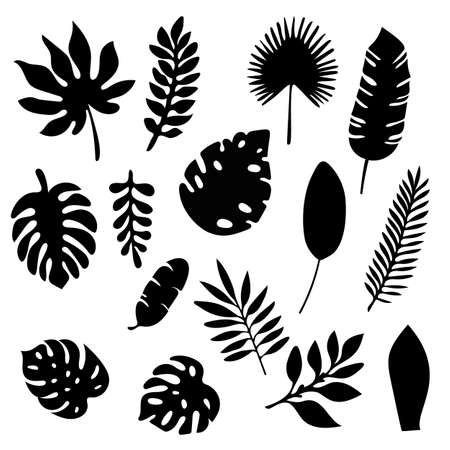 Palm leaves silhouettes set isolated on white background. Tropical leaf silhouette elements set isolated. Palm, fan palm, monstera, banana leaves Vector illustration in black and white colors EPS10. Illustration
