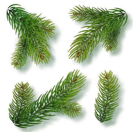 Christmas tree branches set for a Christmas decor. Branches close-up. Collection of Fir Branches. Realistic vector illustration isolated on white background.  イラスト・ベクター素材