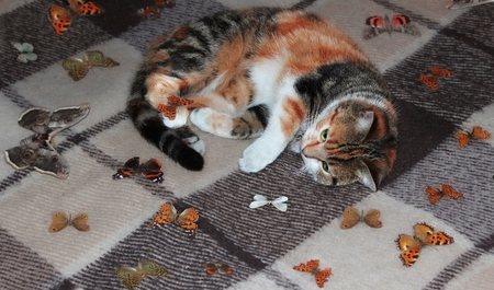 argued: Additional information on request Fixed typo translator Russian-angliysy Yandex.Translate with Russian ? English calico cat playing with butterflies three-colored cat playing with butterflies Stock Photo