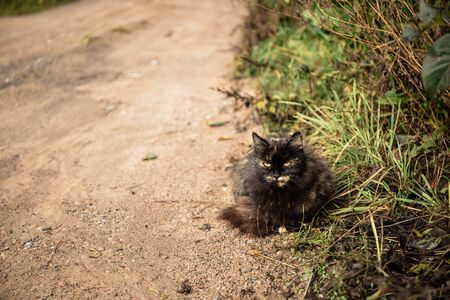 Cat sitting on the sandy rural road and waiting for the owner