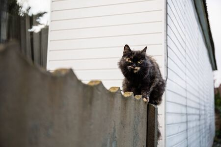 The cat sits on the fence and carefully looks at the prey: a mouse, bird or rat