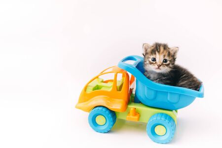 Kitten sitting inside blue toy truck car isolated on white background