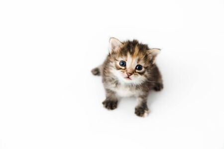 Little kitten isolated on white background close-up. Tabby cat baby sits with a frightened and curious look.
