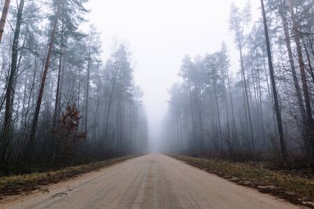 country road in a misty forest with tall pine trees around