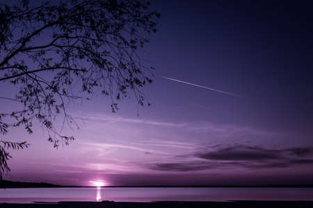 view of the violet sunset through the branches of the will on a bright sunset over the lake, gradient sky