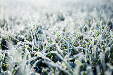 Morning dew froze on a green grassy lawn and turned it into a white veil in the rays of sunlight 版權商用圖片