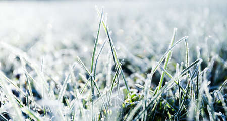 Morning dew froze on a green grass lawn and turned it into a white veil in the rays of sunlight. Banner with winter nature and cold mood. Beautiful natural wallpaper. Background for a weather forecast 版權商用圖片