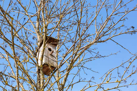 An empty wooden birdhouse high on a tree trunk among the branches. Caring for birds and the environment. Close-up.