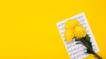 Bouquet of three lush chrysanthemums lays on a sheet with musical notes on a yellow background. The holiday theme of music lovers. Happy Valentine Day February 14. Woman Day March 8. Mother Day May 8. Archivio Fotografico