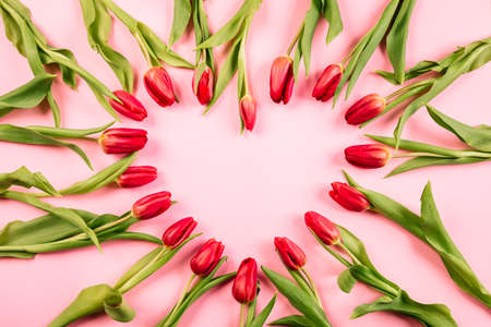 Tulips on a pink background laid out in the shape of a heart with a place for text or insert another object. Harmonics and cardiology. Frame with copy space.