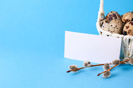 Visiting card, white straw basket full of quail eggs, pussy willow branch on blue paper background. Empty text place. Mockup design of Easter holiday. Handmade decor. Healthy food.