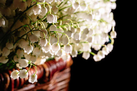 Large beautiful bouquet of white may-lily or lilies of the valley, packed in brown wicker basket isolated on black background with copy space, empty text place. Flower shop advertising. Springtime. Stockfoto