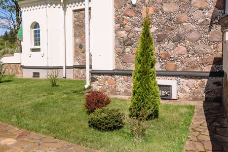 Decorative plantings in the local area in a minimalist style. DIY landscaping. Thuja, juniper, bush and green lawn. Withered plant. Evergreen conifers. Well maintained garden. Landscape design detail.