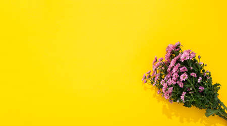 Bouquet of small pink chrysanthemums lays on yellow background with copy space. The holiday card. Happy Valentine Day February 14. Woman Day March 8. Mother Day May 8. Marriage proposal. Romantic gift Stockfoto