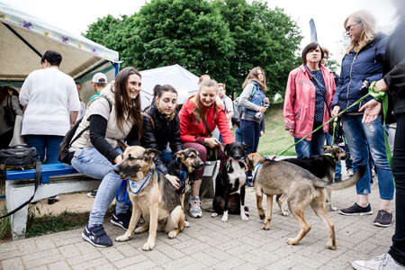 Volunteer exhibition of stray animal Minsk Belarus June 23 2018. Group of people are happy next to the dogs. Good mood. Five big pets on leashes. Visitors choose their companion. Independent women. Redactioneel