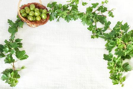 Gooseberries in wicker basket in twig frame with green leaves