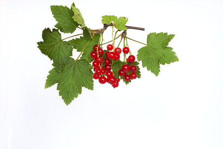 Bunch of red currant on a white background 스톡 콘텐츠