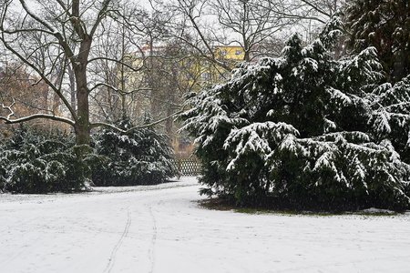 Snow-covered bushes in the city