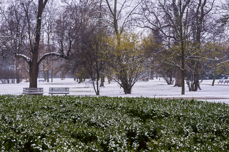 Snow-covered trees, bushes and walkways Banque d'images - 122963806