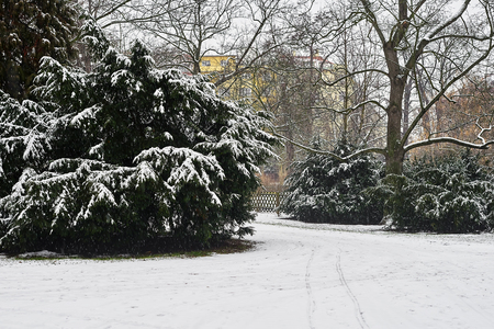 Snow-covered trees, bushes and walkways Banque d'images - 122963813