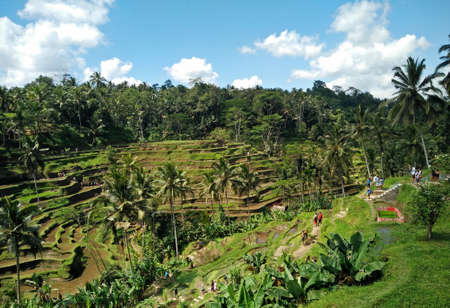 Beautiful rice terraces near Tegalalang village, Ubud, Bali, Indonesia. Spectacular rice fields in the jungle and the mountain near Ubud. Stock Photo