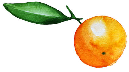 Mandarin orange fruit. Hand drawn watercolor painting isolated on white background. Illustration of fruit tangerine 스톡 콘텐츠