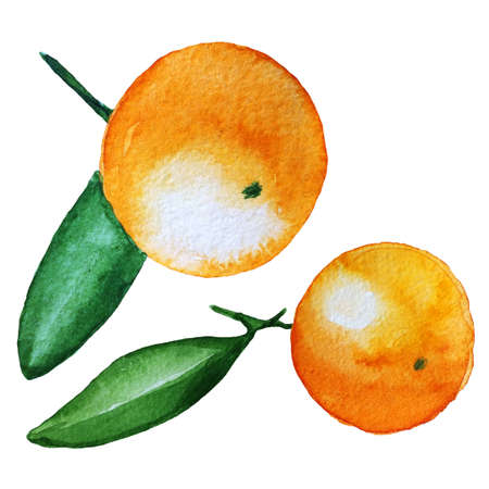 Set of mandarin orange fruit. Hand drawn watercolor painting isolated on white background. Illustration of fruit tangerine