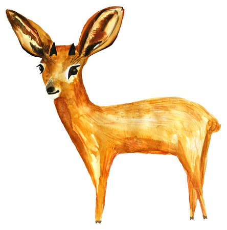 Steenbok deer watercolor illustration isolated on white background. Hand drawn and painted animal