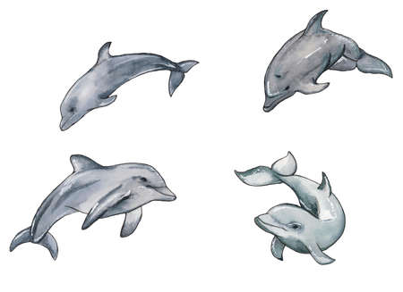Hand drawn illustration set of watercolor swimming dophins isolated on white background