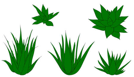 Set of aloe vera with cut pieces with fresh drops of water isolated vector illustration Ilustracja