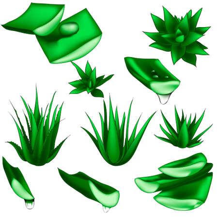 Set of aloe vera with cut pieces with fresh drops of water isolated vector illustration Zdjęcie Seryjne