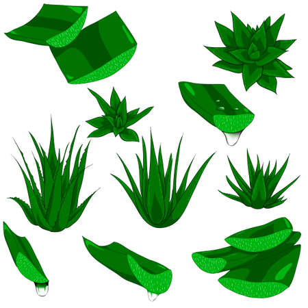 Set of aloe vera with cut pieces with fresh drops of water isolated illustration Stok Fotoğraf - 131400233